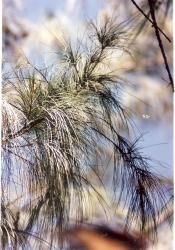 South Point beach grass